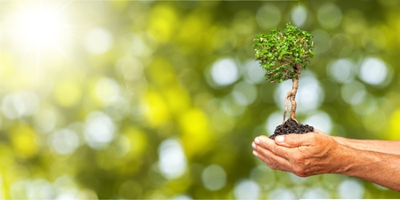 Human hands holding plants Stockfoto