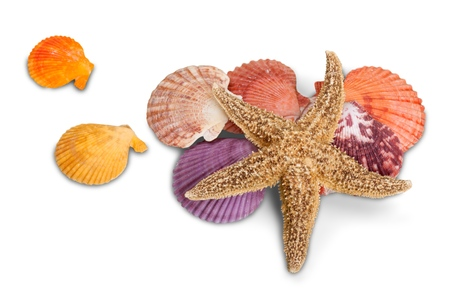 Close-up sea star and shells on white background Фото со стока