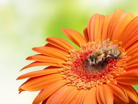 Flying bee on flower