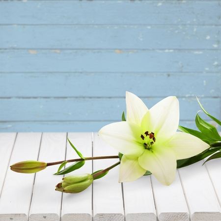 Easter Lily (with clipping path)