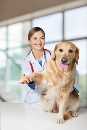 Veterinarian giving injection to dog in clinic