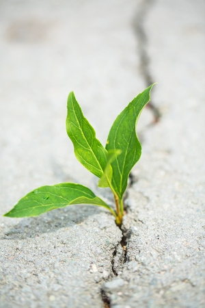 plant taking root on a concrete footpath Stock Photo