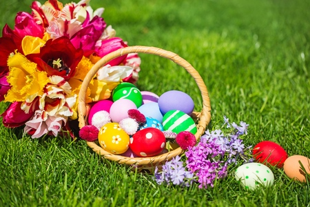 Basket filled with easter eggs on meadow with daffodil Reklamní fotografie