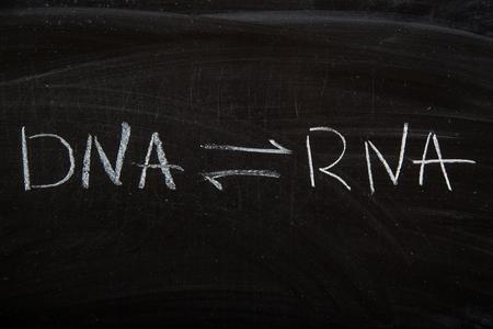 DNA transcript to RNA, RNA retro transcript to DNA equation Stock Photo