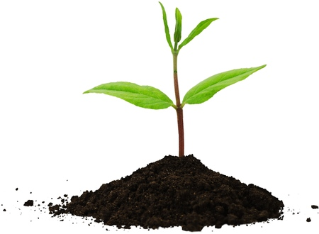 Seedling growing out of a mound of soil Imagens