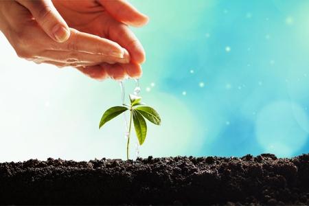 Nouveau concept de vie végétale