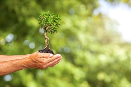 Human hands holding plants Stock Photo