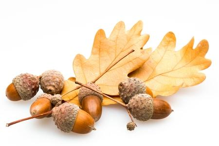 Acorns with Brown Oak Leaves