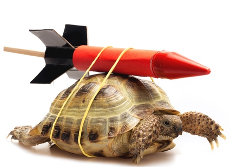 Turtle with a rocket strapped to its