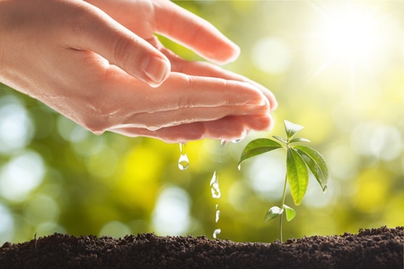 Hands Watering Young Plant Imagens