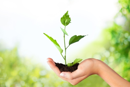 Green Growing Plant in Human Hand on beautiful natural background Stock Photo