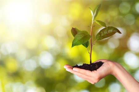 Human hands holding plants on blur background