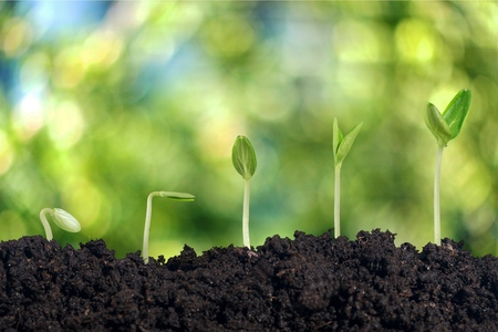 concept agriculture seeding growing step