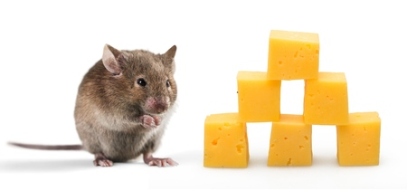 Little mouse and chees Standard-Bild - 107643490