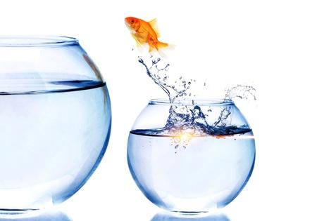Goldfish Jumping to bigger aquarium