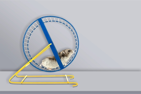 Hamster running in circle on white background