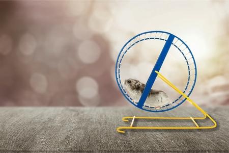 Hamster läuft im Kreis auf Holztisch Standard-Bild