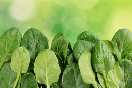 Young Spinach Leaves Border