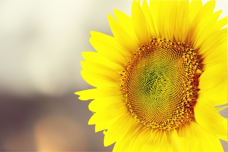 Sunflower wearing sunglasses on field over cloudy