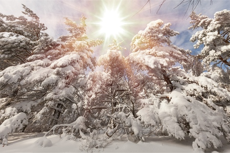 Sun at the winter background