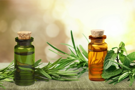 Fresh tea tree and essential oil