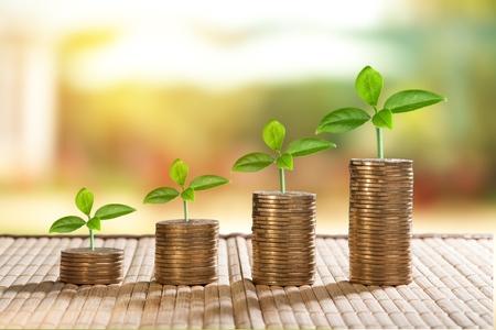 Monedas y planta de crecimiento de dinero para finanzas y banca, ahorro de dinero o concepto de aumento de intereses Foto de archivo