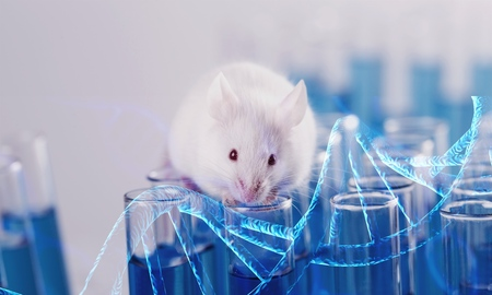 Laboratory Mouse with Test Tubes