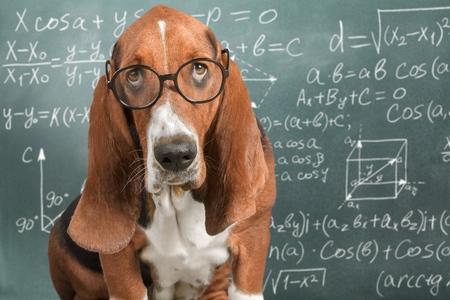 Math dog crazy glasses academic animal blackboard 스톡 콘텐츠