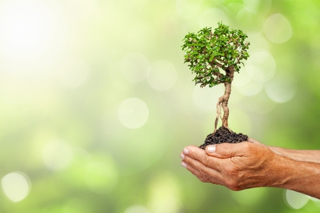 Planta de cultivo verde en manos humanas sobre fondo natural hermoso