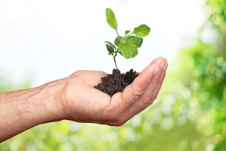 Caring For Nature Banco de Imagens - 124452769