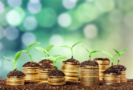 Monedas en suelo con plantas jóvenes en