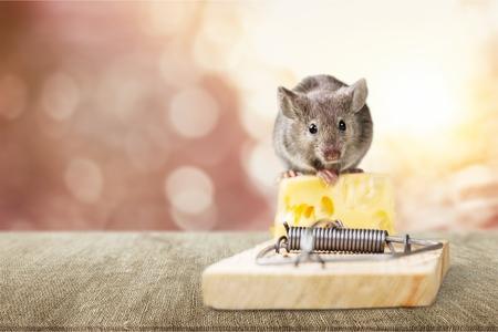 Trampa para ratones con queso y ratón