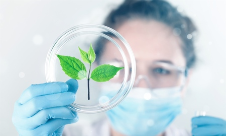 Scientist holds sprout lab laboratory plant agriculture agronomy analyzing Foto de archivo