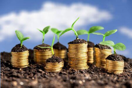 Monedas en suelo con plantas jóvenes