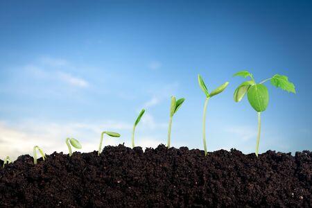 Wachstum neuen Lebens im Hintergrund