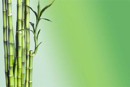 Molti steli di bambù su sfondo naturale, decorazione vegetale.