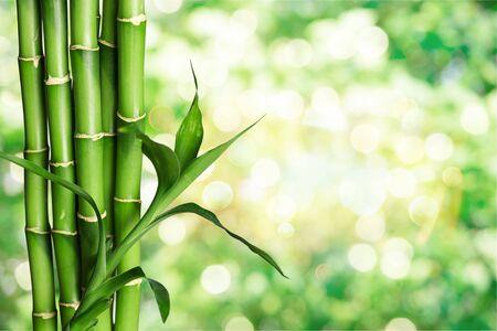 Molti steli di bambù sullo sfondo