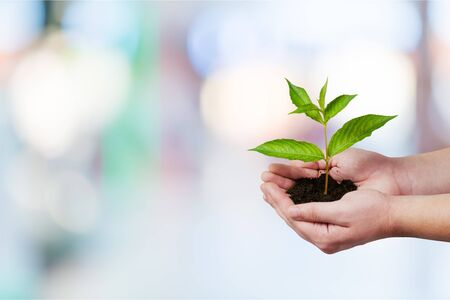 Green Growing Plant in Human Hands on beautiful natural background Stock Photo