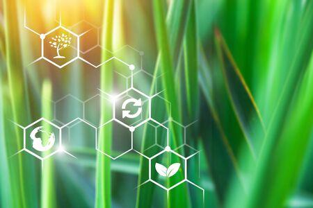 Landwirtschaftliches Feld an einem klaren sonnigen Tag. Hochtechnologien und Innovationen in der Agrarindustrie. Untersuchen Sie die Qualität des Bodens und der Ernte. Gewinn- und Investitionswachstum. Umsetzung technologischer Lösungen.