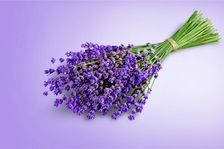 Bouquet of lavender flowers on white background