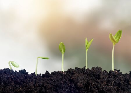 Growth of new life on  background