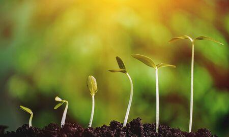 Groei van nieuw leven concept