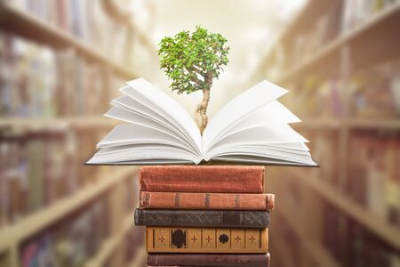 education concept with tree of knowledge planting on opening old big book in library with textbook, stack piles of text archive and aisle of bookshelves in school study class room          - Image