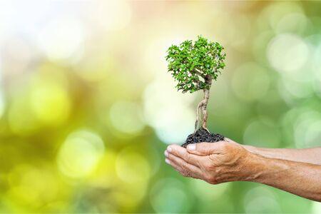 Menschliche Hände des Ökologiekonzeptkindes, die großen Pflanzenbaum mit auf unscharfer Hintergrundweltumgebung halten