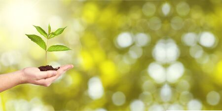 Human hands holding plants Stock Photo