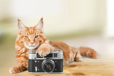 Adorable red cat with clock on table Фото со стока