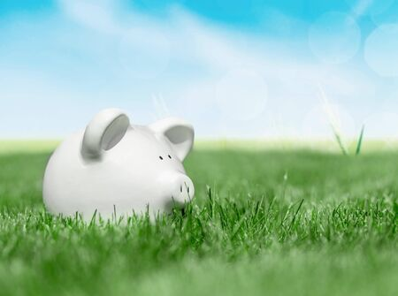 White piggy bank in green grass