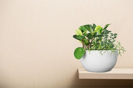 House plant in a flower pot isolated on a wall background