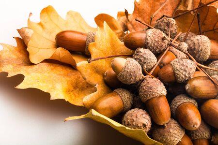 Montón de bellotas marrones en primer plano de hojas de roble