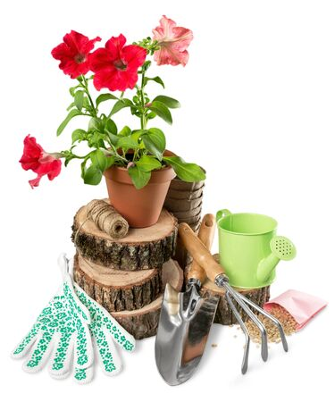 Flower Pot with red flowers and gardening utensils isolated on white background